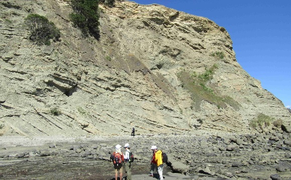 Early Miocene MTD units at Army Bay near Auckland.