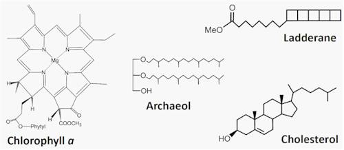 Figure caption: Examples of biomarkers (lipids) found in environmental samples. Chlorophyll a is the main pigment in plants, archaeol is a common compound in archaea, ladderanes are diagnostic for anaerobic ammonium oxidizing (anammox) bacteria, and cholesterol a widespread indicator of eukaryotes, which include humans.