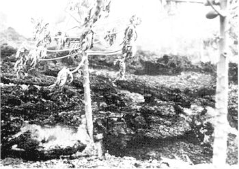 Figure 10: Lava flows destroy a pawpaw grove, Hawaii (Hawaiian Slide Services).