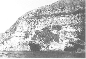 Figure 7: Sequence of lava flows at Cathedral Bay with contacts marked by zones of black obsidian (o).