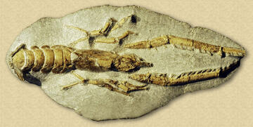 Image result for nz fossil