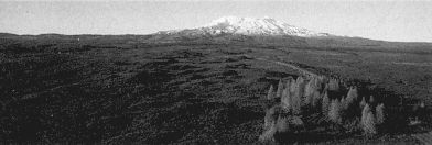 Figure 6. Mounds formed by the volcanic debris avalanche from Mt. Ruapehu 9500 years ago. This avalanche originated from the northwest flank of the Ruapehu cone, above Iwikau and travelled down the Whakapapa catchment up to 12 km from source. The road to the Chateau (right) passes through the axis of the mound field. (DL Homer)